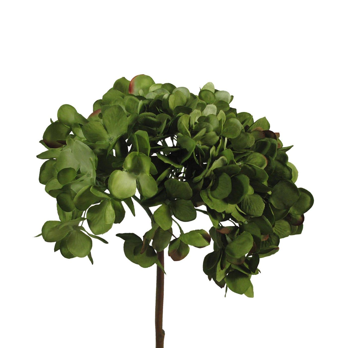 Hydrangea Green Stem