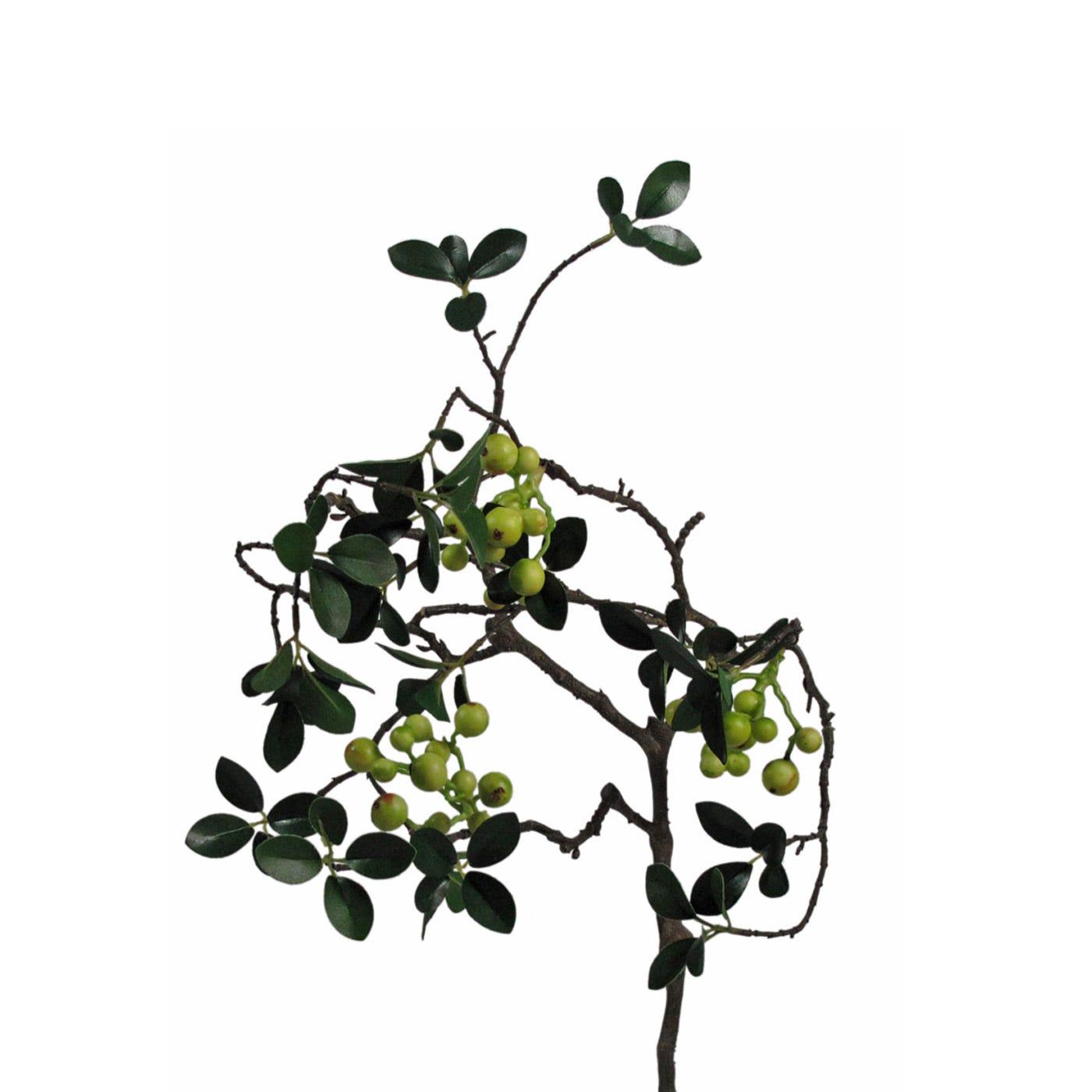 Evergreen Berry Stem