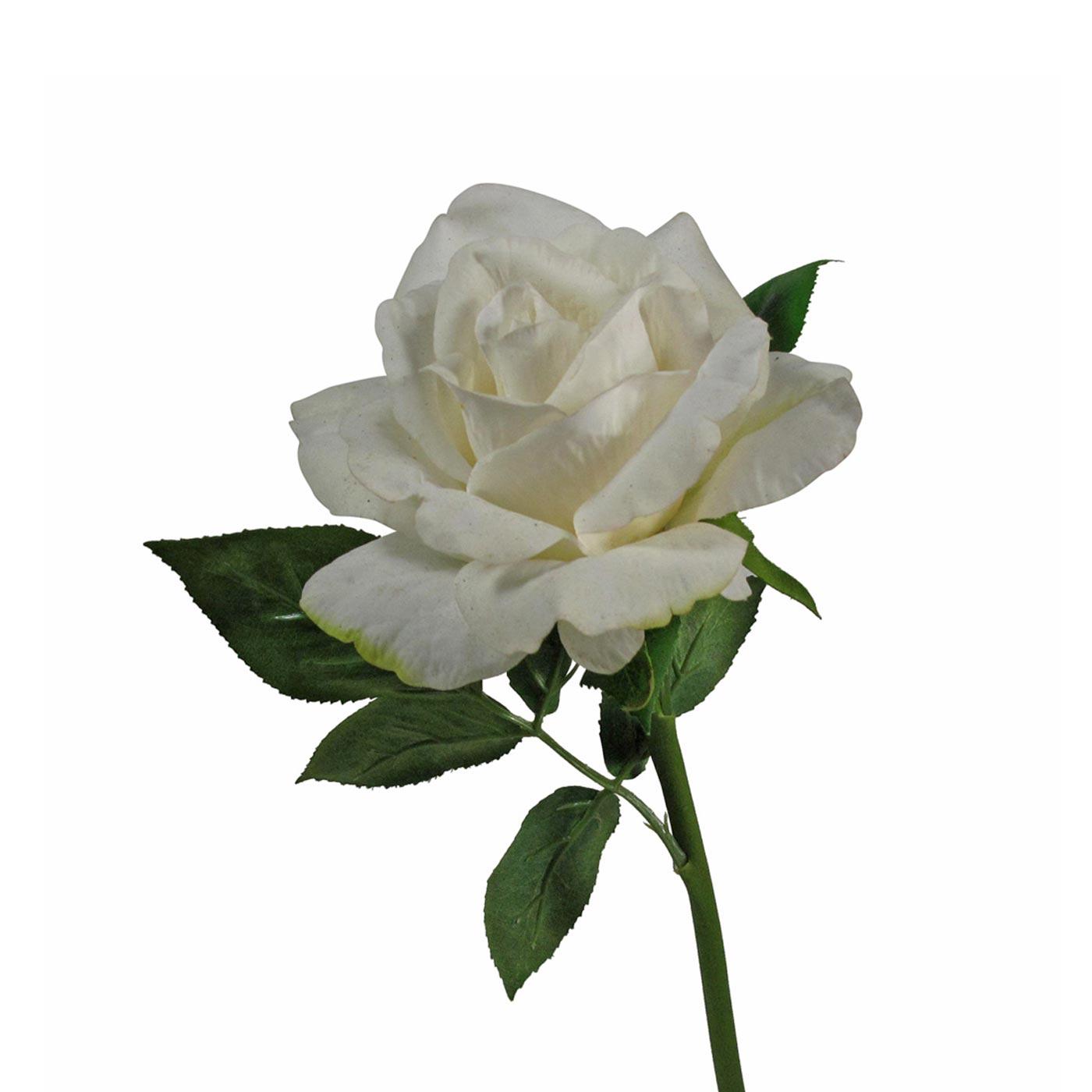 Rose Cream Stem