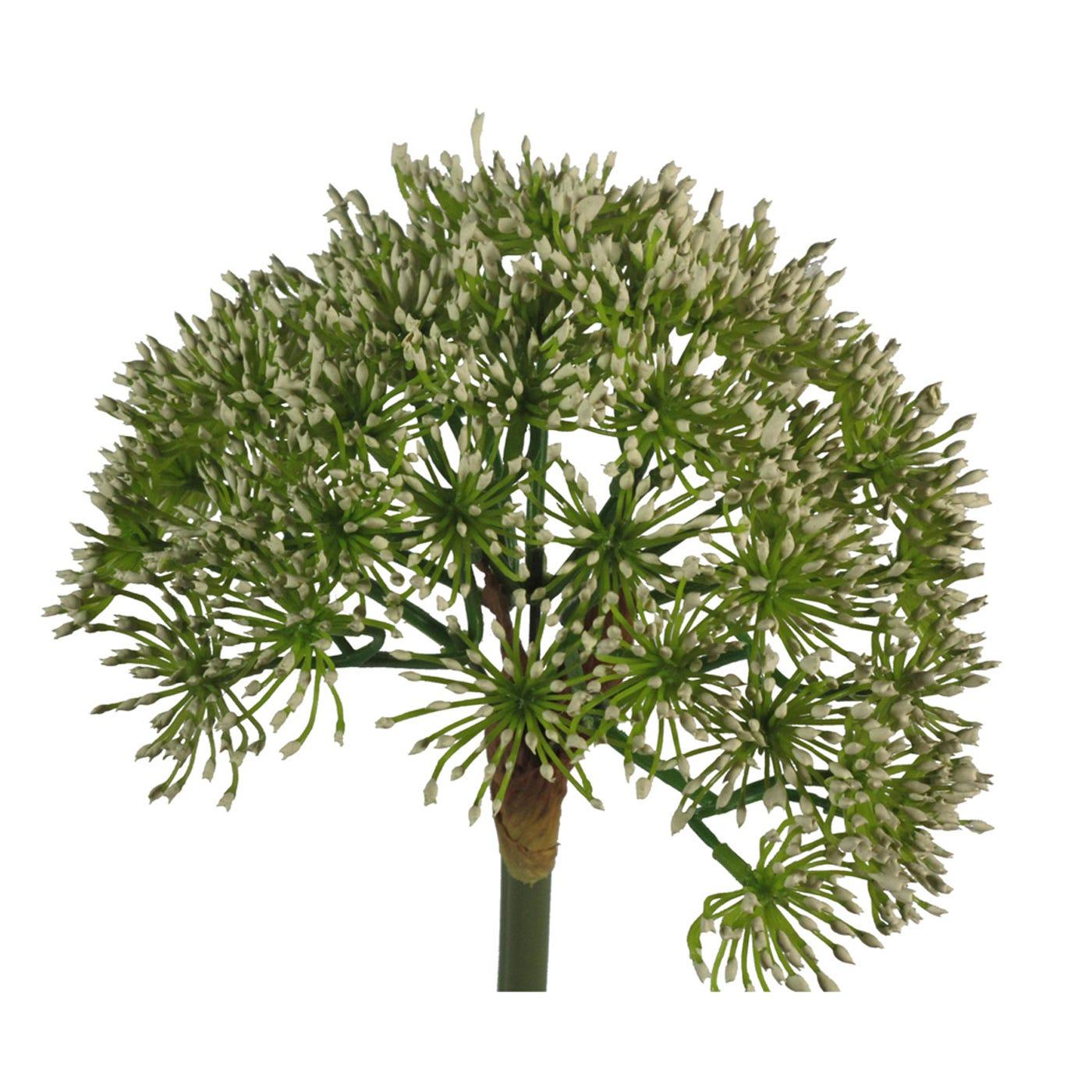 Allium Stem White