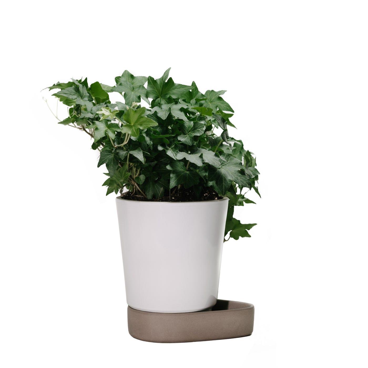 Sip Plant Pot