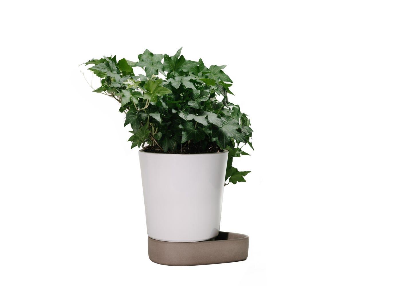 Sip plant pot stone