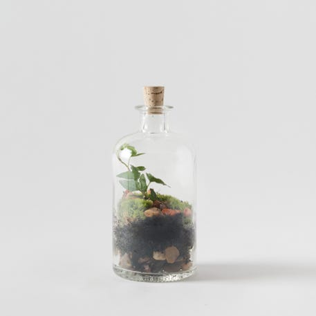 Tinyjohn Terrarium Workshop with London Terrariums | Westfield London | 22nd May | 6pm - 8pm