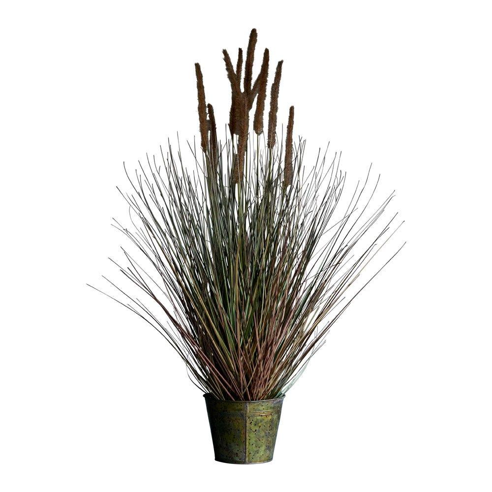 Dogtail Grass