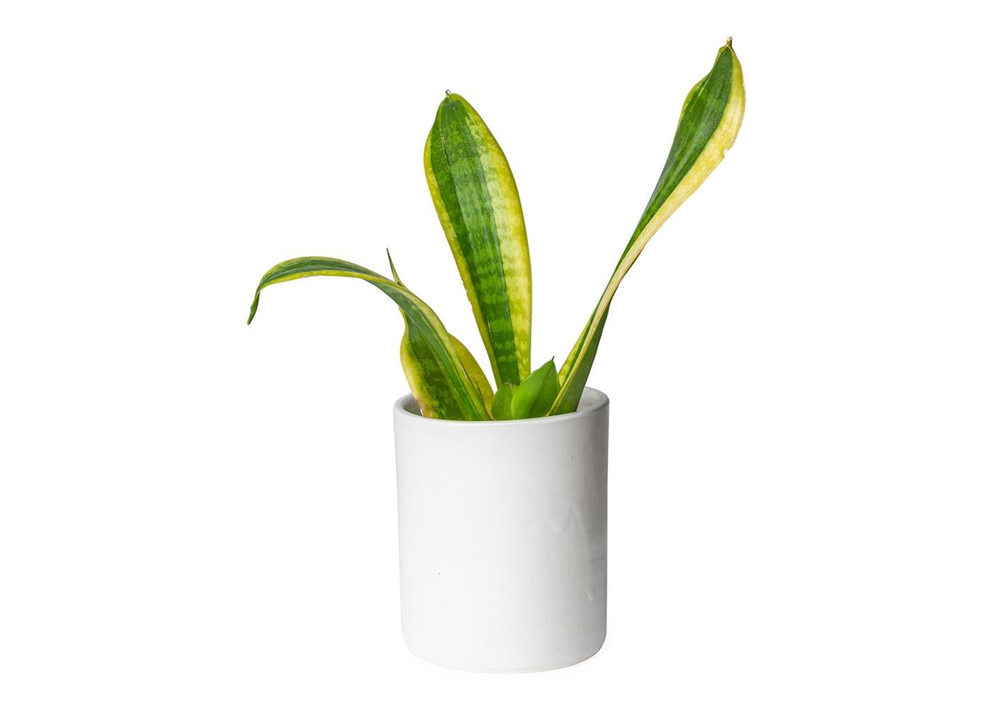 Porcelain vessel can be reused as a plant pot