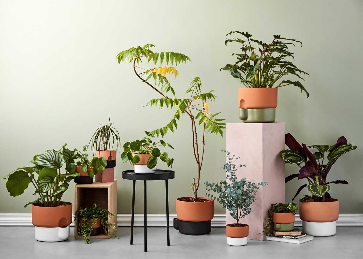 Oasis planter collection