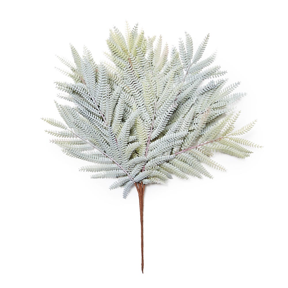 Mimosa Grass